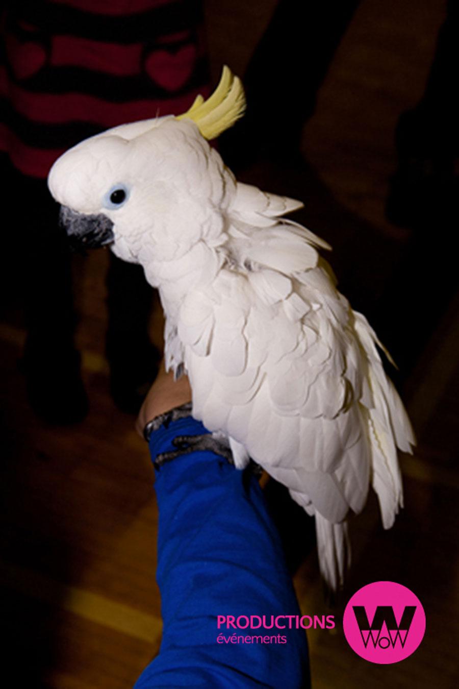 Perroquet,-enfant